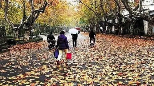 杭州这9处风景你不能错过 - 金玉米图片